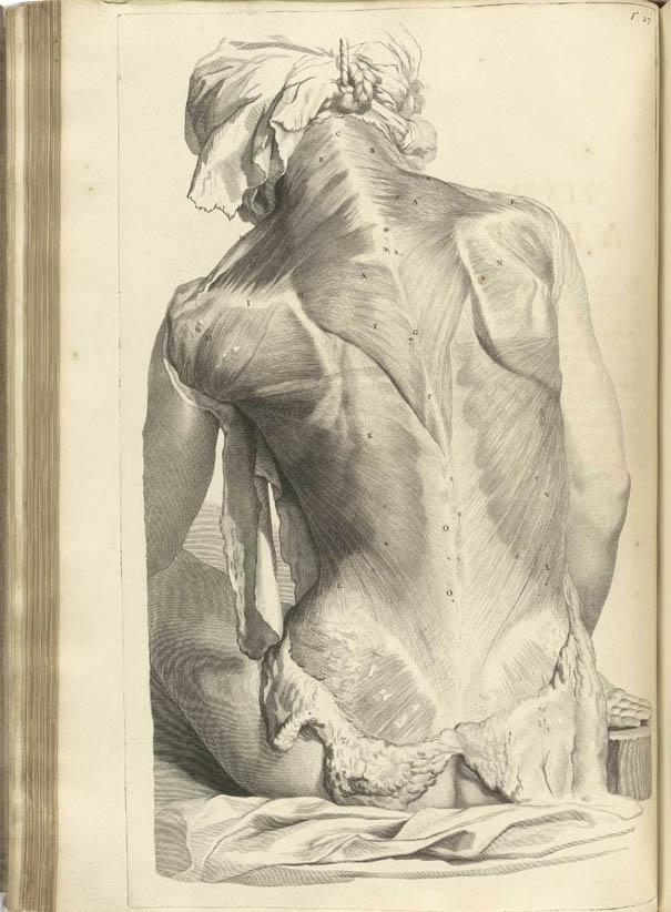 Anatomia Humani Corporis (1690-I-0)