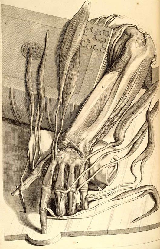 Anatomia Humani Corporis (1690-I-1)