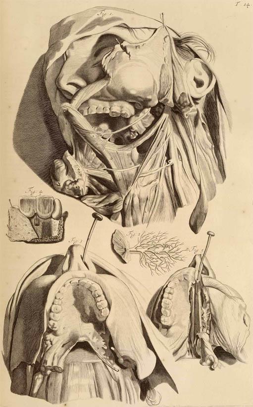 Anatomia Humani Corporis (1690-I-4)