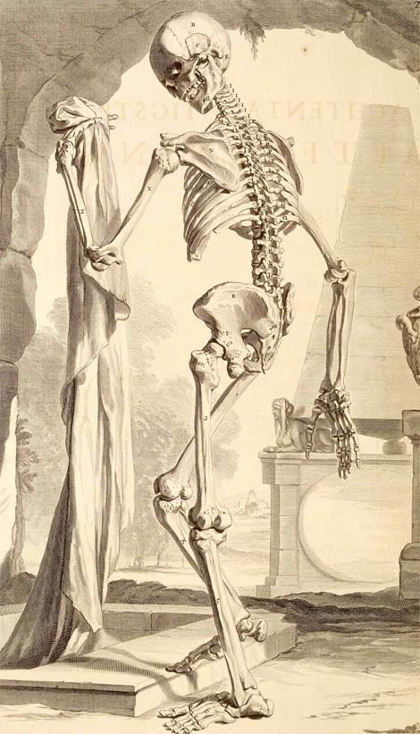 Anatomia Humani Corporis (1690-I-5)