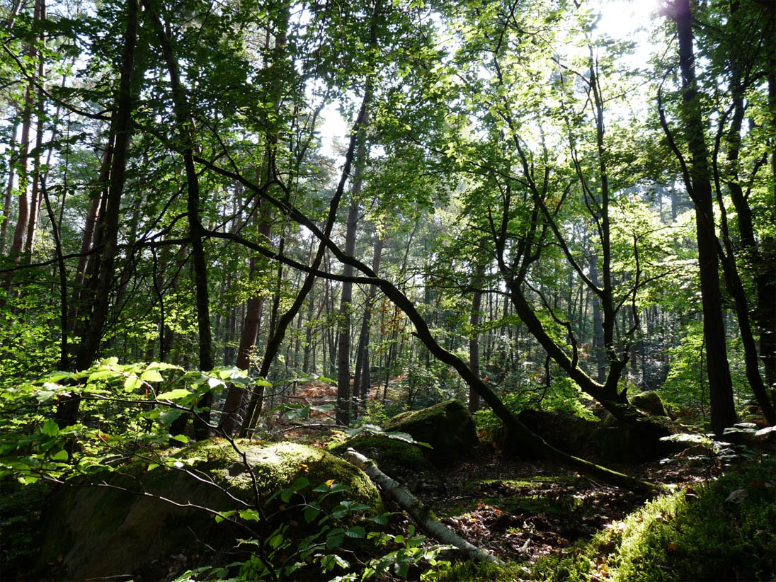 Forêt de Fontainebleau (France)